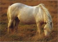 http://www.world-of-animals.de/Bilder/tiere/hg2/albino.jpg
