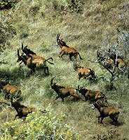 www world of animals de